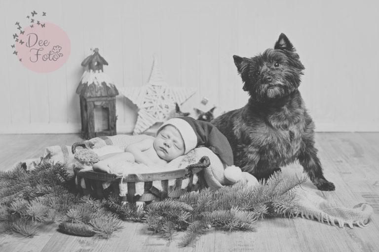 deefoto-fotografin-kinder-familie-baby-tiere-hunde-hochzeiten-bayern-amberg-neukirchen-sulzbach-rosenberg-hohenstadt-hersbruck-lauf0-1